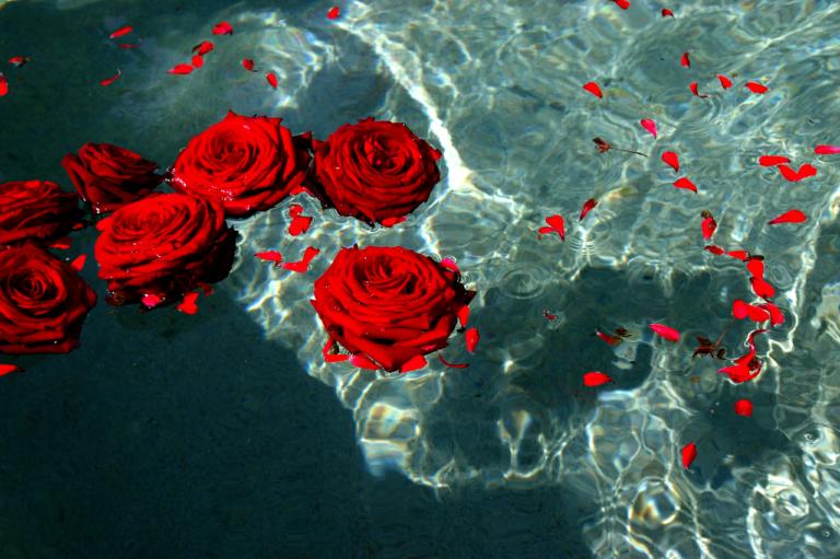 Roos op het Water